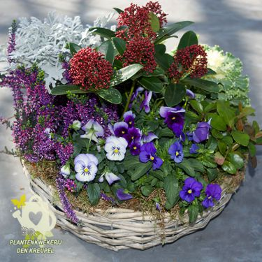 grafdecoratie-krans-viooltjes