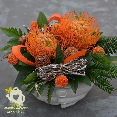 oranje-handjes